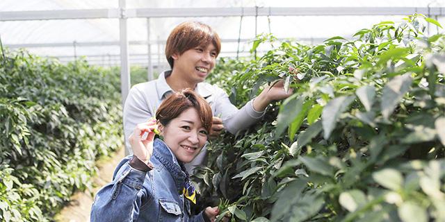 高知県農業の紹介